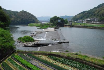 遡上アユを見るため朝倉堰に潜りました! - 高知市公式ホームページ